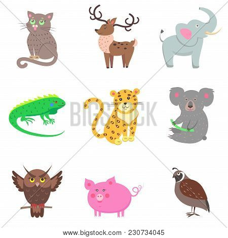 Vector Illustration Of Brown Owl And Quail, Pink Pig, Gray Koala And Elephant, Spotty Jaguar, Green