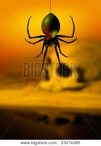 Black Widow Spider And Skull
