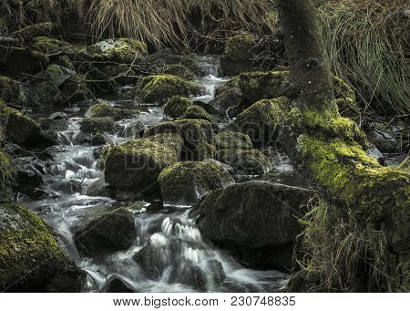 Nature, Rural Winter Woodland With Running Water Brook And Stones Covered In Moss