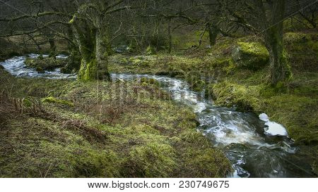 Nature, Rural Landscape Scenic View Of A Woodland Flowing Water Brook With Trees And Moss Covered Ro