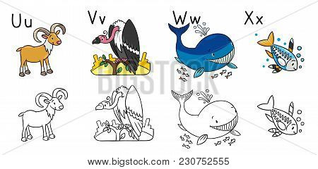 Coloring Book Or Picture Of Funny Urial Vulture Whale And X Ray