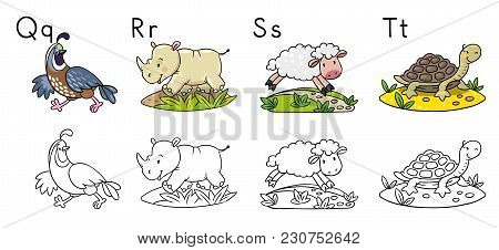 Coloring Book Or Coloring Picture Of Funny Quail, Rhino, Sheep And Tiger. Animals Zoo Alphabet Or Ab