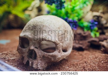 Halloween Skull Without Jaw. Path Included In File. Human