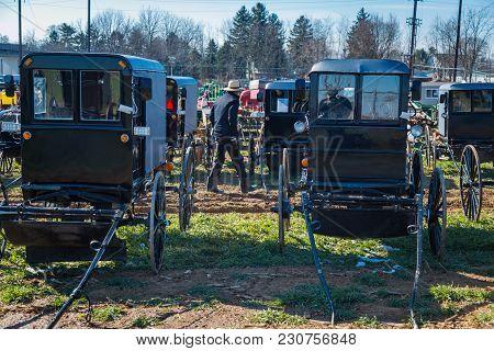 Walking Among Amish Buggies At Sale