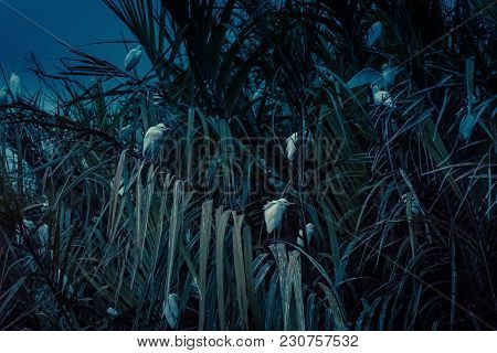 A Flock Of Birds In The Lagoon At Night Near Tangalle, Sri Lanka. White Birds Sit In Tropical Thicke