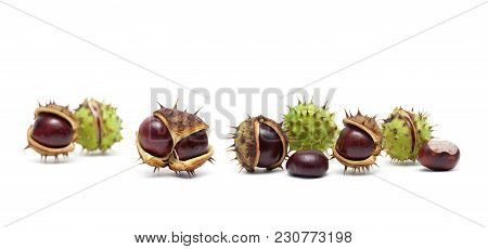 Ripe Chestnuts On A White Background. Horizontal Photo.