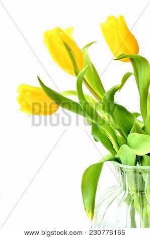 Bouquet Of Yellow In A Vase On A White Background, Concept Of Women's Day Or Mother's Day Or Easter