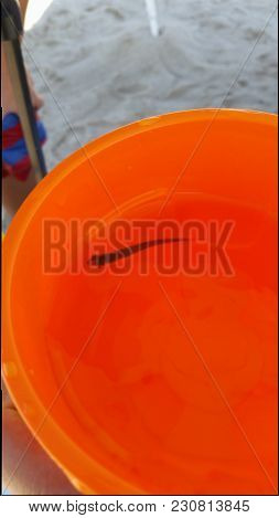 Tiny Fish From The Ocean Captured In A Big Orange Bucket For A Quick Pic.