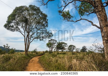 Landscape Of  Meadow With Tree , Khao Yai National Park  Thailand .