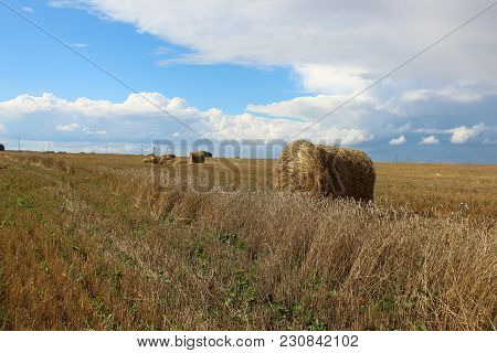 The Hay Stacks On The Field In Siberia