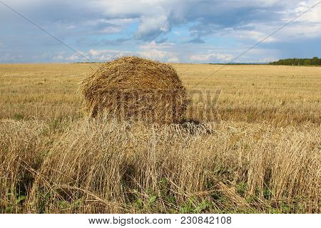The Sheaf Of Hay In A Wheat Field