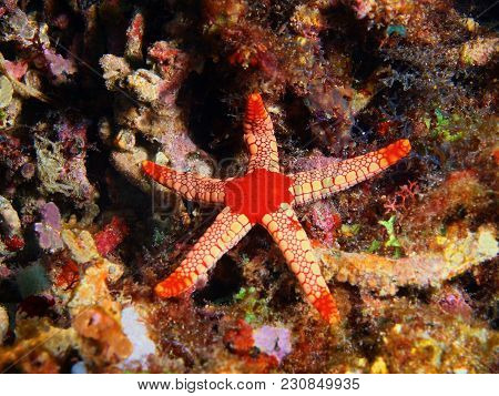 The Amazing And Mysterious Underwater World Of The Philippines, Luzon Island, Anilаo, Starfish