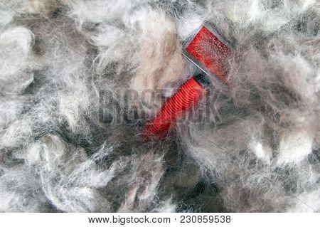 Concept Grooming Spring Season, Shedding Dog Wool. Shedding Tool - Rakers Brush For Dog. Slicker Bru