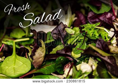 Fresh Salad With Mixed Greens Lettuce Arugula, Mesclun Mache Close Up Healthy Food Meal