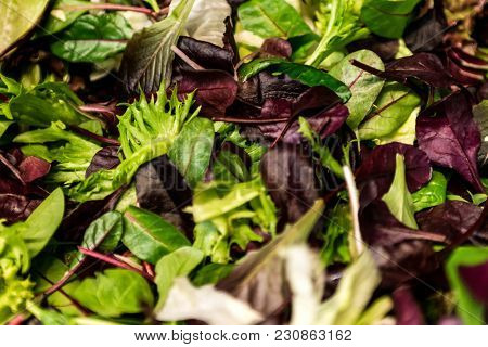 Fresh Salad With Mixed Greens Lettuce Arugula, Mesclun, Mache Close Up. Healthy Food Green Meal