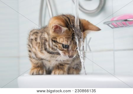 Small Kitten, First Acquaintance With Water, And Washing Your Hair, Pet