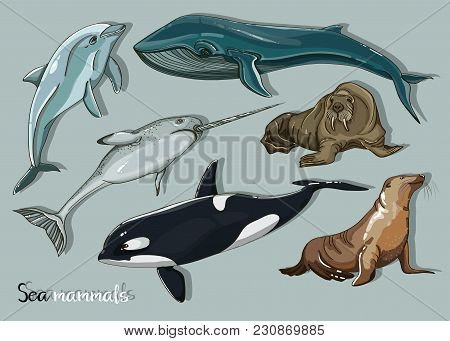 Sea Mammals Animal Collection Icons Set. Vector Fish Illustration In Ocean Life Background. Marine E