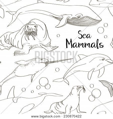 Sea Mammals Animal Collection Icons Pattern. Vector Fish Illustration In Ocean Life Background. Mari