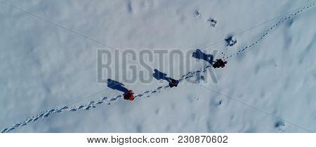 Wild Animal Trail Followed By Mountaineers ;trekking