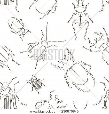 Set Of Beetle Illustrations Pattern. Vector Illustration, Eps 10