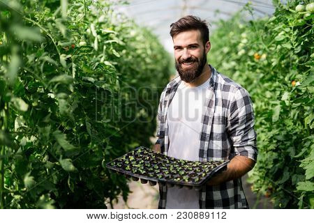 Handsome Young Man Working In A Greenhouse.