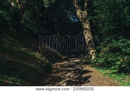 Empty Country Gravel Road Passing Through The Green Forest In The Region Of Normandy, France. Nature