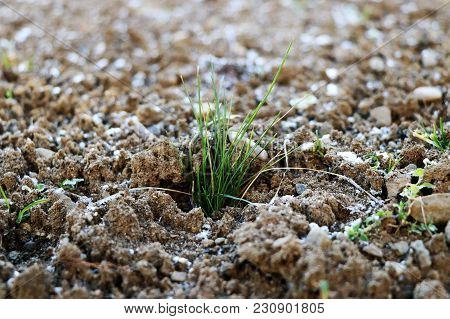 A Piece Of Grass In Frozen Earth As Beginner Spring