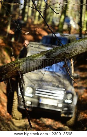 Dirty Offroad Cars Overcome Obstacles In Fall Forest, Selective Focus. Thick Branch In Front Of Suv.