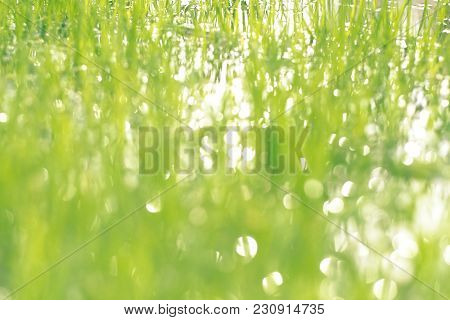 Blurred Abstract Background. Water Meadow In Spring Closeup. Copy Spase