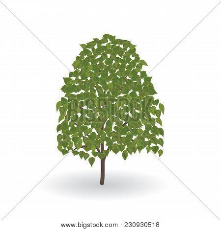 Tree Large Green Leaves Isolated On White Background Vector Element For Design Illustration Art Crea