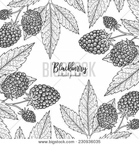 Berry Engraving Illustration With Blackberry. Detailed Frame With Barberries. Hand Drawn Elements Fo