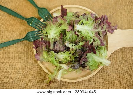 Fresh Oak Leaf Lettuce On Wood Dish (red Oak And Green Oak)