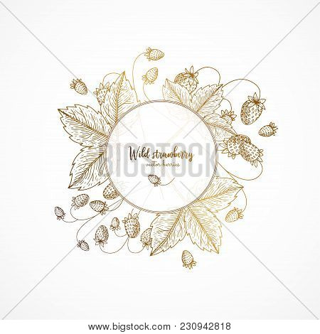 Gold Vintage Illustration With Wild Strawberry. Engraved Style. Healthy Food Design Template With Be