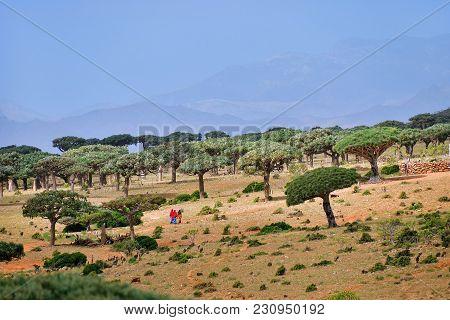 Beautiful Landscape Of The Exotic Island Socotra, Yemen, Africa