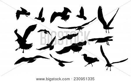 Set Of Multiform Flying Seagulls In Black Tones.