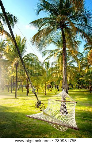 Hammock In Tropical Coconut Palm Grove With Side Light In Portrait Format