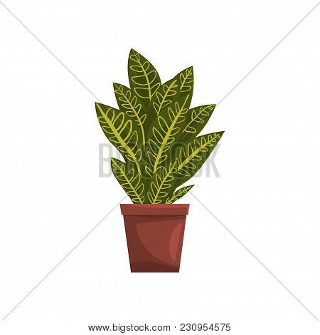 Codicium Indoor House Plant In Brown Pot, Element For Decoration Home Interior Vector Illustration I