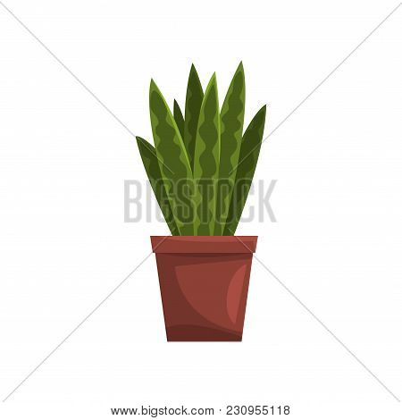 Snake Indoor House Plant In Brown Pot, Element For Decoration Home Interior Vector Illustration Isol
