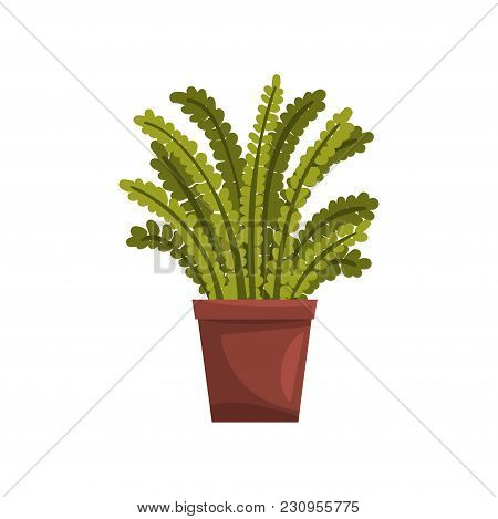 Fern Indoor House Plant In Brown Pot, Element For Decoration Home Interior Vector Illustration Isola