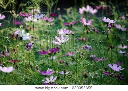 Background From Tender Soft Pink Beautiful Flowers In Green Grass, Floral Natural Vintage Hipster Im