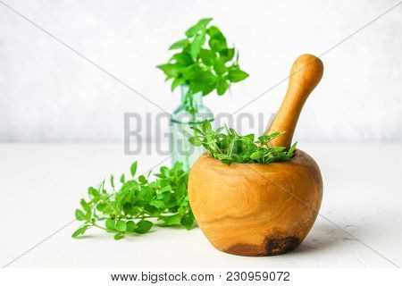 Green Lemon Basil In A Wooden Mortar On A Light Background. Behind The Basil In The Bottle