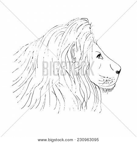 Lion Male Head Ink Hand Drawn Sketch On White Background. Object Isolated.