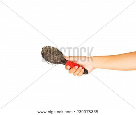 Hand Holding Comb Or Slicker Brushes For Pet Grooming With Pet Hair Isolated On White Background.