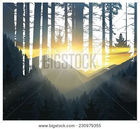 Abstract Nature Background. Mountains Panorama And Silhouette Of Trunks. Colorful Sunset In Wild Woo