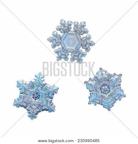 Three Snowflakes Isolated On White Background. Macro Photo Of Real Snow Crystals: Stellar Dendrites