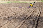 Planting potatoes on vegetable garden, potato seeds in furrows on a potato field poster