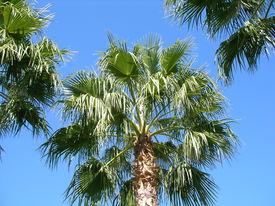 Palm Trees Blue Sky