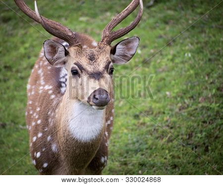 A Spotted Deer Looking On In Bandipur National Park, Karnataka, India