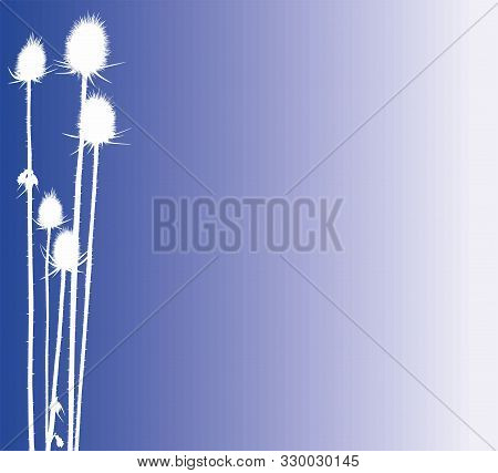 Composition Thistle, Creative Design With Light, Darkness And Plant