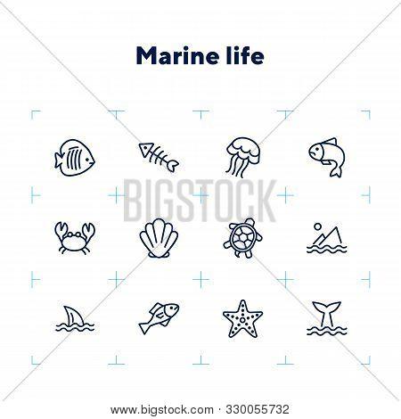 Marine Life Icon. Set Of Line Icons On White Background. Crab, Turtle, Seashell, Starfish, Shark Fin